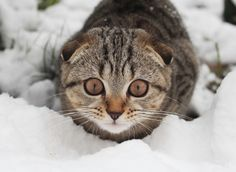 ready to attack by Daly Elena / 500px