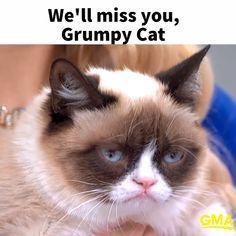 RIP Grumpy Cat - RIP Grumpy Cat Well miss that permanent pout! The post RIP Grumpy Cat appeared first on Gag Dad. Grumpy Cat Disney, Grumpy Cat Kostüm, Grumpy Cat Memes Clean, Cat Jokes, Funny Cat Memes, Funny Cats, 9gag Funny, Cat Cat, Grumpy Cat Frozen