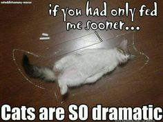 Cats are so dramatic