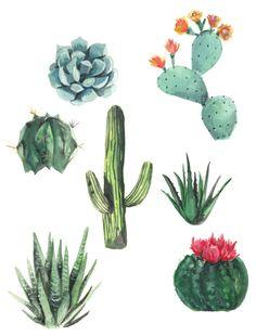 Succulents watercolor print Succulent watercolor by hgrahamandco