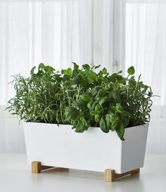 You can maintain your clean, modern style in your kitchen, and keep fresh herbs handy for delicious meals by growing your own in a BITTERGURKA plant pot.