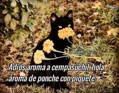 "Gatos Cool en Instagram: "". . . . . . #memesdegatoscool #gatoscool😸 #gatos_cool #diciembre #diciembre2020 #poncheconpiquete #ponche #navidad #fiestasdecembrinas #gato"""