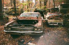 Slipping into #Nature. #Beauty #RustinPeace