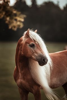Horse Photos, Horse Pictures, Cute Animal Pictures, Wild Animals Photography, Equine Photography, Pretty Horses, Beautiful Horses, Animals And Pets, Cute Animals