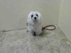 SUPER URGENT 4/12/14 Brooklyn Center  MEI MEI - A0996249  SPAYED FEMALE, WHITE, MALTESE, 14 yrs OWNER SUR - WAITING4PU, NO HOLD Reason LLORDPRIVA  Intake condition GERIATRIC Intake Date 04/10/2014, From NY 11206, DueOut Date 04/10/2014,  https://www.facebook.com/photo.php?fbid=786047958074752&set=a.617942388218644.1073741870.152876678058553&type=3&theater