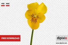 Free photo of yellow pansy for download on www.dipixio.com #freephoto #dipixio #freebie #freedownload