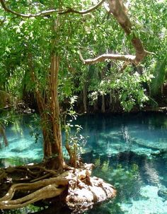 Beautiful pools at Chemka Hot Springs near Moshi, Tanzania.