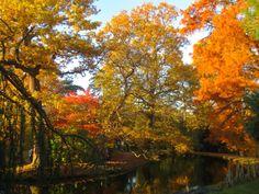 Meteo paris (75000 - FR) - 1er site meteo pour Paris et l'île-de-France - previsions meteo à 15 jours gratuites - Paris weather forecast -  Automne flamboyant - Arboretum Chatenay Malabry - (19/11/2015)  Colors of fall