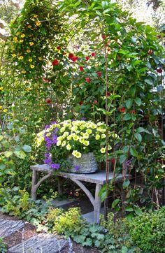 """""""Irish Rose"""" cottage, carmel  IMG_6795"""