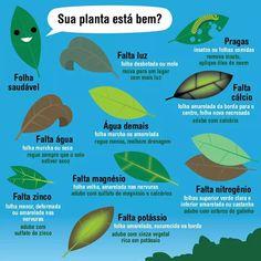 Sua planta está bem? Eco Garden, Garden Deco, Home Vegetable Garden, Garden Care, Garden Pots, Amazing Gardens, Beautiful Gardens, Organic Gardening, Gardening Tips