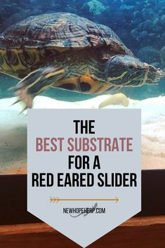 Whether you are a new or an experienced Red Eared Slider keeper, what kind of substrate to use in your tank is always a hot topic and everyone has got an opinion. Aquatic Turtle Tank, Turtle Aquarium, Aquatic Turtles, Turtle Pond, Red Eared Slider Tank, Red Eared Slider Turtle, Turtle Habitat, Reptile Habitat, Reptile Pets