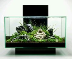 The edge fish tank set up