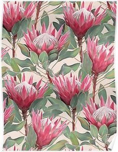 'Painted King Proteas on Cream ' Art Print by micklyn Protea Art, Protea Flower, Botanical Art, Botanical Illustration, Framed Art Prints, Canvas Prints, Australian Native Flowers, Cream Art, Trendy Wallpaper