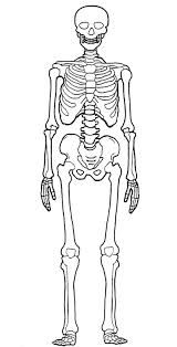 scheletro di robespierre