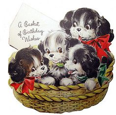 A basket of cute puppies