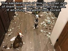 Funny Animal Pictures Of The Day 26 Pics