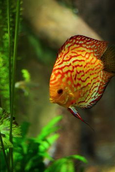 Discus  Photo by Ruuustin on Flickr