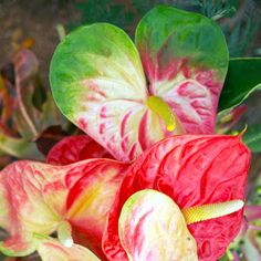 In Bloom by Dennis Begnoche - Photo taken of flowers blooming Kauai Click on the image to enlarge.