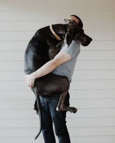 GREAT DANE :)