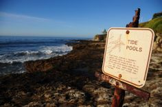 Go to tide pools - DONE 05/10/2015 Natural Bridges State Beach