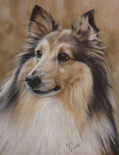 "Hundeportrait in Pastell ""Kimmy"" Sheltie ~ Zeichnung Hund ~ Dog painting / Dog portrait in pastel by Jutta Pallasch ~ PASTELLBLICKE ~ Tierportraits"