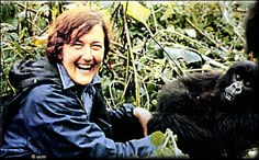 Dr. Dian Fossey founded the Karisoke™ Research Center in Rwanda's Virungas Mountains in 1967, to protect and study the endangered mountain gorillas. Although Fossey's life was cut short, her work has continued through the Karisoke Research Center and grown into conservation efforts for other wildlife and programs for people who live near the gorillas. Dian Fossy Gorilla Fund; http://gorillafund.org/