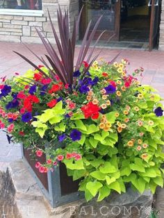 Container-wow the color!! I wonder if we could build containers around our trees and put lovely shade plants in
