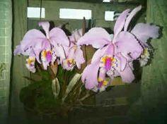 Orquideas,última obra de mi abuelo en la Tierra ..