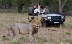 Experience the best African Safari with the country's flagship game reserves. Book the best value lodges with Kruger National Park today! Kruger National Park, National Parks, Sand Game, Gym Facilities, Game Lodge, Private Games, Nocturnal Animals, Before Sunrise, Game Reserve