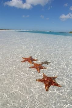 "Cayo Largo. Starfish or sea stars are echinoderms belonging to the class Asteroidea. The names ""starfish"" and ""sea star"" essentially refer to members of the class Asteroidea. They are very very beautiful, are'nt you?"