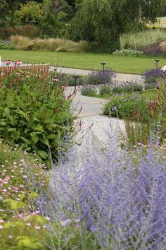 Persicaria 'Darjeeling Red' and Geranium 'Wargrave Pink' used on mass as groundcover in this Accent designed garden in Surrey UK.