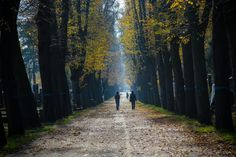Natural scenery has long been accepted and utilized in mental health circles as an effective tool for the reduction of psychological stress. Heart Of Europe, Urban Setting, Natural Scenery, Vienna, Cemetery, Places To See, Psychology, Country Roads, Fall