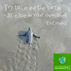 #Turtle Conservation volunteer project, Costa Rica  #quote