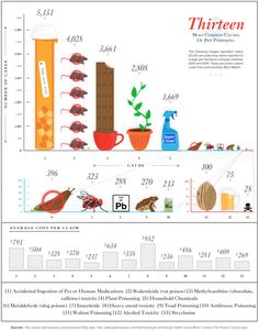 Beautiful lies - infographics inspirations: pets poisoning pinned By http://Barkingstud.com
