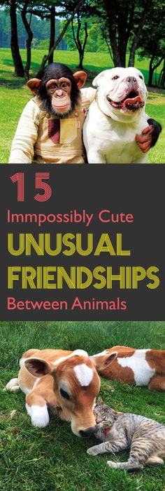 Animals tend to be more loving than humans. While you expect two animals of the same kind to be buddies, sometimes it happens that two animals that you would not have ever expected to be friends become best friends. Take a look at these impossibly cute unusual friendships between animals.