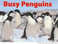 Busy Penguins (A Busy Book) by Schindel John