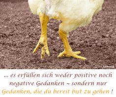 ... es erfüllen sich weder positive noch negative #Gedanken ~ sondern nur Gedanken, die du bereit bist zu gehen !