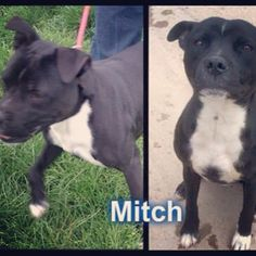 Mitch is urgently looking for a rescue space :( #safeandsound #rescue #rescuedog #dontshopadopt #dog #newlife #happy #love #givesomuch #giveadogachance #somanyneedanewhome #adoption #pet #beautiful #bestfriend #mansbestfriend www.safe-and-sound.org