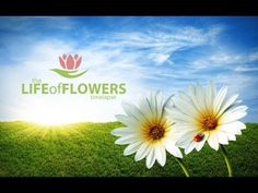 The Life of flowers (Жизнь Цветов) Timelapse 1080p - YouTube