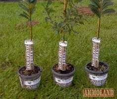 Team RealTree food plot trees