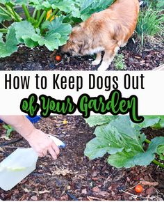 Gardening Tips, Lesbian, Your Dog, Garden Ideas, Diys, Easy Diy, Remedies, River, Queen