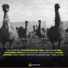 Camel, 21st, Instagram Posts, Animals, Animales, Animaux, Camels, Animal, Animais