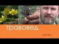 Травовед. Чистотел. Рассказывает Моряков Сергей Викторович - YouTube