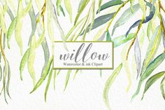 Willow branches and leaves. Willow branches, leaves and ink watercolour branches black and golden. Willow leaves and willow branches are perfect for creation tender and cute design. Watercolor clip art hand drawn. Light green blue branches, wedding invitation, Romantic et tender composition with watercolour eucalyptus branches. Wedding clip art. Ideal for fine art photography, logo and blog and wedding invitations. This hand drawn floral watercolor is ideal for use in your&a