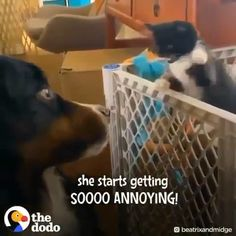 Cute kitten is so annoying for this dog please follow Animals Board for more videos Cute Animal Videos, Funny Animal Pictures, Cute Funny Animals, Cute Baby Animals, Funny Dogs, Animals And Pets, Cute Animal Humor, Cute Kittens, Cats And Kittens