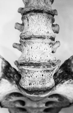 lower lumbar and sacral areas of the spine
