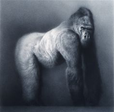 Paul Emsley, chalk drawing