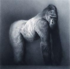 Paul Emsley, chalk drawing