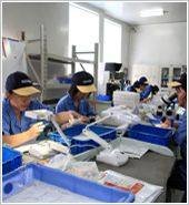Workers in production process