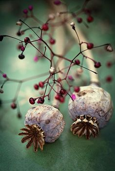 Beeren und Mohn Berries and poppy seeds Simply Beautiful, Beautiful World, Beautiful Flowers, Beautiful Pictures, Deco Floral, Jolie Photo, Seed Pods, Macro Photography, Dried Flowers